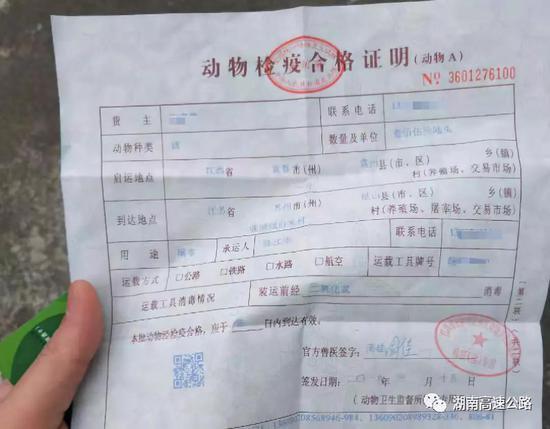 湖南货车偷运256头猪 无检疫证明欲行贿工作人员