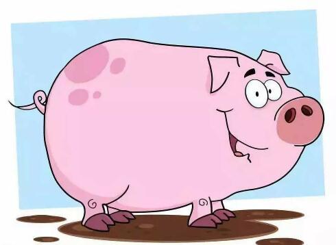 最强猪周期来临? 去化加速猪价上涨迎拐点