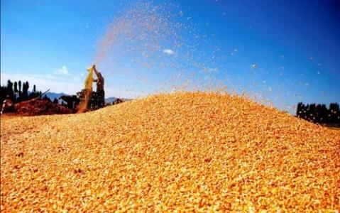 """东北玉米大量到货 华北迎来节后""""第二跌"""""""