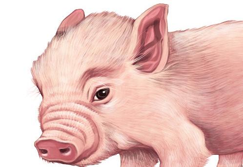 猪价持续小幅回落 但后期总体上涨大趋势不变