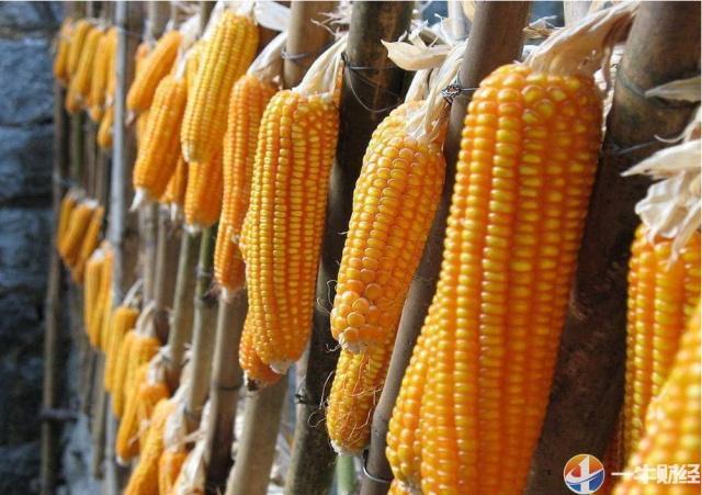 5年半最大购买!刚刚,中国进口30万吨美国玉米!释放什么信号?