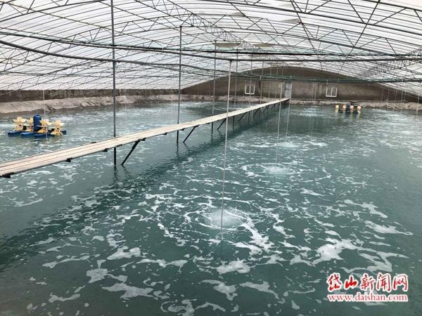 浙江省舟山市岱山县:两家养殖场试水纳米管增氧技术养南美白对虾