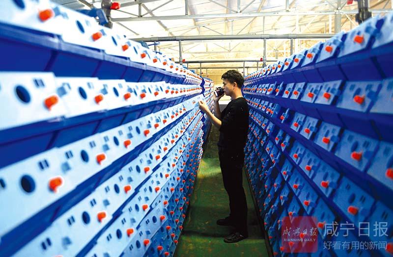 湖北省咸宁市咸安区:科技养虾蟹