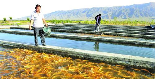 坚持生态水产养殖之路 新疆渔业跃龙门