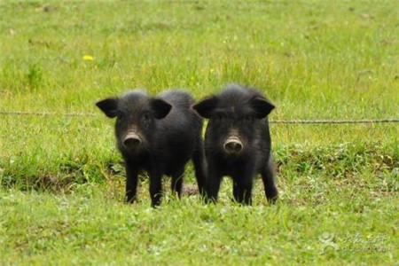 """让人民群众吃上""""放心肉"""" 新修订的《长春市肉品管理条例》"""