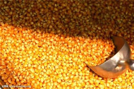 如何学会玉米栽种技巧,让玉米产量提升,有需要的可以看看!