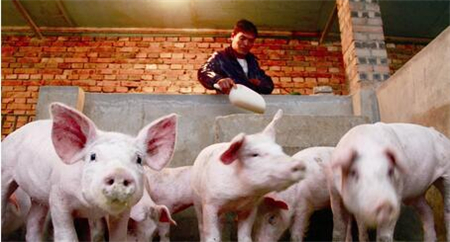 我国从俄罗斯进口猪肉导致非洲猪瘟疫情?官方:没有的事!