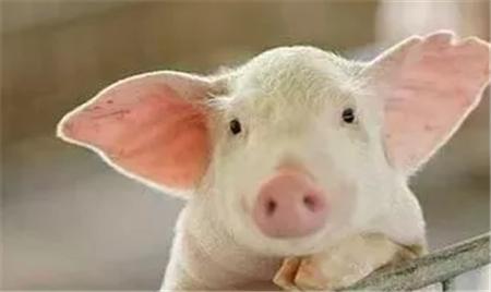 供需失衡,全国猪价迎来大范围上涨