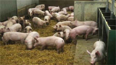 山东平邑:3月以来生猪价格以涨为主,上涨原因分析