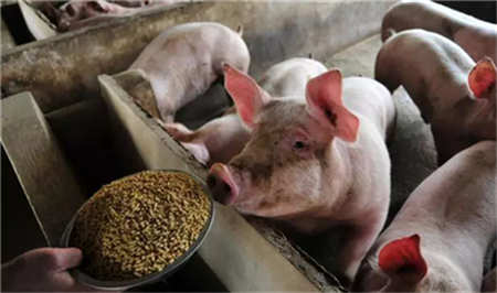 最近很多人问过完节假日之后,猪肉价格会怎样?