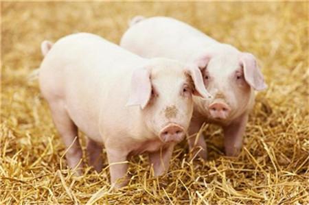 生猪市场呈现趋稳态势,且小幅回落态势!